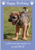 "Border Terrier-Happy Birthday - ""Are You Really THAT Old"" Theme"